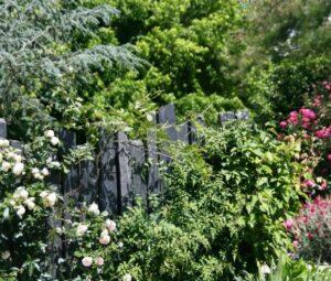 L'harmonie schiste et végétation