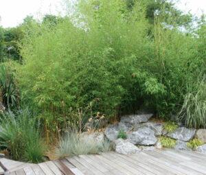 Légèreté des graminées et bambous
