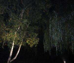 Projecteur encastré éclairage arbres