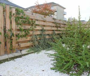 Plantes grimpantes sur clôture bois sur-mesure